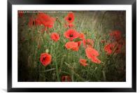 Poppy Love., Framed Mounted Print