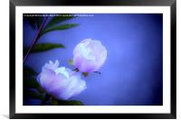 Soft Pink Flowers., Framed Mounted Print