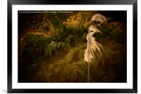 The Grass Whispers., Framed Mounted Print