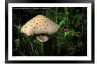 Fairy King's Throne., Framed Mounted Print