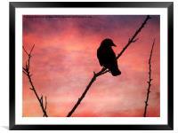 Jackdaw Sunset., Framed Mounted Print