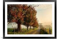 Autumn Morning Amble., Framed Mounted Print