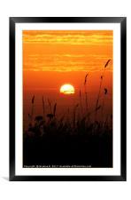 Grass Sunset 3, Framed Mounted Print