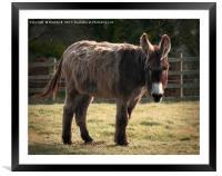 Furry Friend, Framed Mounted Print