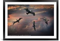 Pelican Sky, Framed Mounted Print