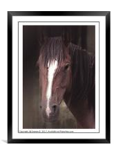 Quantock Pony Portrait, Framed Mounted Print
