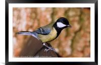 Great Tit 3, Framed Mounted Print