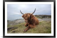Highland Cow Chilling Out, Framed Mounted Print