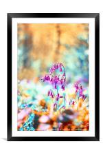 Bluebell Twist, Framed Mounted Print