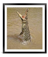 Queensland Wild Crocodile., Framed Mounted Print
