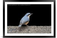 Nuthatch, Framed Mounted Print