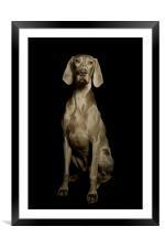 Dog, Framed Mounted Print
