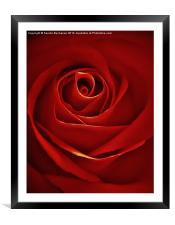 Vintage Red Rose, Framed Mounted Print