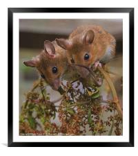 Side By Side, Framed Mounted Print