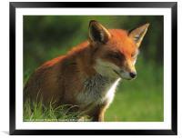 Foxy Lady, Framed Mounted Print