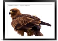 Eagle eyed, Framed Mounted Print