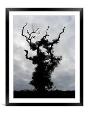 Gothic Tree, Framed Mounted Print