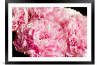 Pink Peony Bouquet, Framed Mounted Print