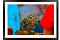 Owl - Strigiformes, Framed Mounted Print