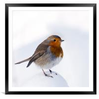 A Snowy Perch for Robin, Framed Mounted Print