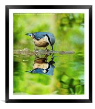 Nuthatch reflections, Framed Mounted Print