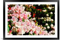 Spring Bloom, Framed Mounted Print