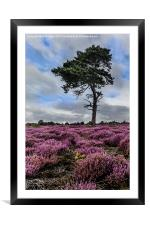 Alone In The Heather, Framed Mounted Print