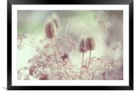 Icy Morning. Wild Grass , Framed Mounted Print