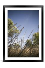 a bug's eye view, Framed Mounted Print