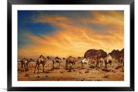 Camels in Wadi Rum, Framed Mounted Print