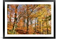 Autumn Colour in Derbyshire, Framed Mounted Print