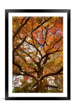 Changing Of The Oak , Framed Mounted Print