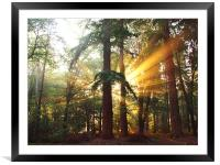 New Forest Dawn, Framed Mounted Print