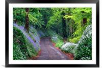 Bluebell Woods , Framed Mounted Print