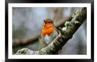 Looking forward to spring, Framed Mounted Print
