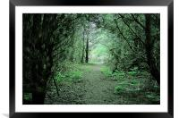 Through the forest arch, Framed Mounted Print