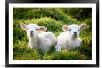 Spring Lambs, Framed Mounted Print