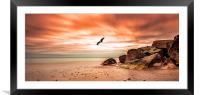 Eagle flying over Hengistbury Head, Framed Mounted Print