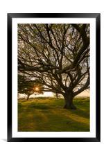 Cissbury Spring Evening, Framed Mounted Print