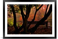 Bench in the Park, Framed Mounted Print