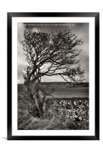 Windswept Winter Tree, Framed Mounted Print
