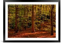 Autumn Woodland Evening, Framed Mounted Print