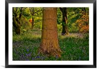 Magical Spring Woodland, Framed Mounted Print