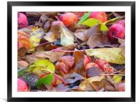 Autumn , Framed Mounted Print