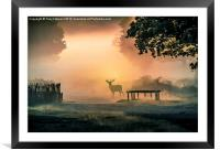 Deers In The Mist, Framed Mounted Print