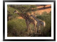 Parent and Child, Framed Mounted Print