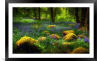 Woodland British Bluebells, Framed Mounted Print