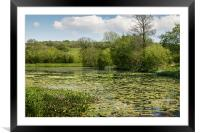 Summer Lake, Framed Mounted Print