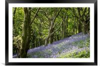 Bluebell Hill, Framed Mounted Print