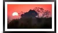 Mounting Sun, Framed Mounted Print